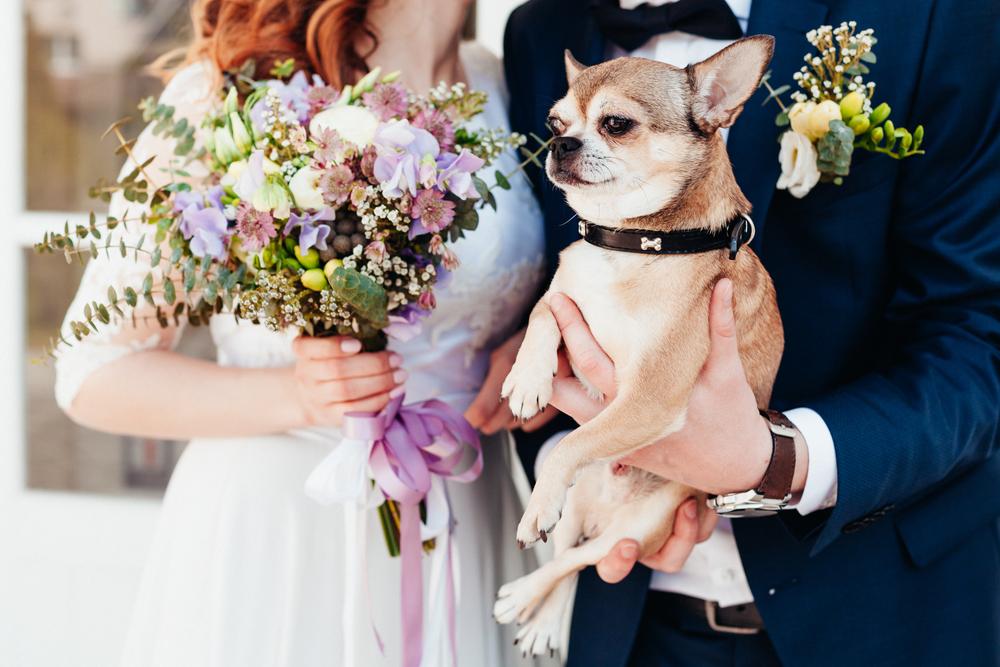 pets casamento
